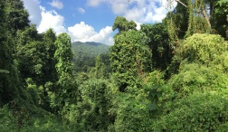 Dense jungle covered the high ridge northwest of Nan.